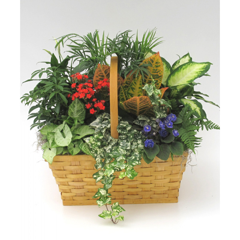 European Garden Basket, Flowering Get Well Plants