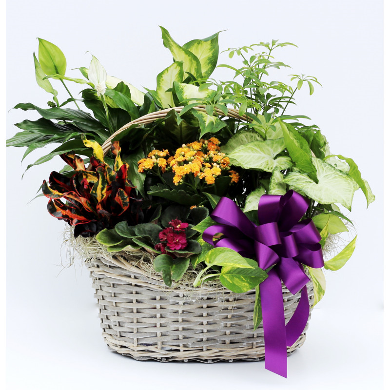 Get Well Plant, Flowering Plants