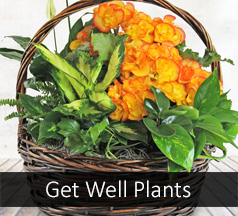 Get Well Plant Flower Delivery
